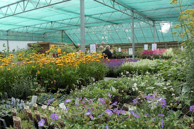 Bloemenexport doet het beter dan plantenexport - foto_11._bloemen_plus