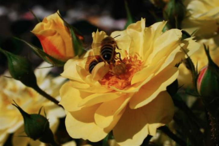 Nieuwe handscanner meet boomdikte - Bijen-weelde