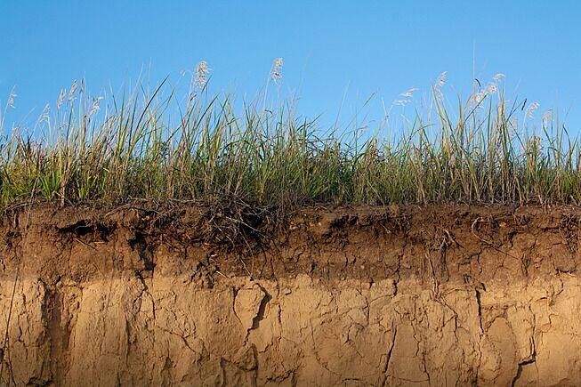 Kennisplatform bodem en natuur opgericht hortipoint for Boden bilder