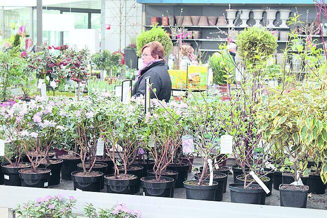 Netwerklunch Greenport Boskoop: Leer je klant beter kennen - handelsstemming-tuincentra