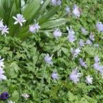 stinzeflora bosanemoon