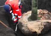 Doorbraak in financiering bomenonderzoek - aanplant-gemeente-170x120