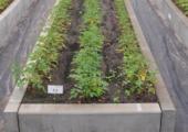 Doorbraak in financiering bomenonderzoek - klein-proef-dmds-170x120