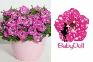 Petunia BabyDoll