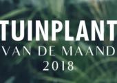 Dit zijn de Tuinplanten van de Maand in 2018 - Schermafbeelding-2017-06-15-om-15.35.35-170x120