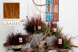 Serengeti® Grasses
