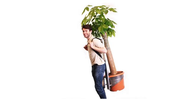 Wout: de kamerboom die je least en slechts drie keer per jaar hoeft water te geven - Website-Wout2