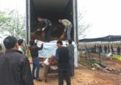 Bomenexportbedrijf op China failliet - bomen-uitladen-china-170x120