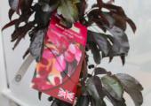 GrootGroenPlus gekoppeld aan nieuwe voorjaarsbeurs - malus-aros-met-label-170x120