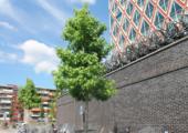 Buxusmot verspreidt zich verder over Nederland - netwerk-businessmodel-170x120