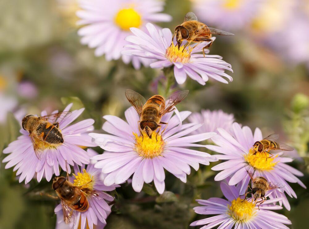 Bestuivingskaart geeft inzicht in aantal bijensoorten
