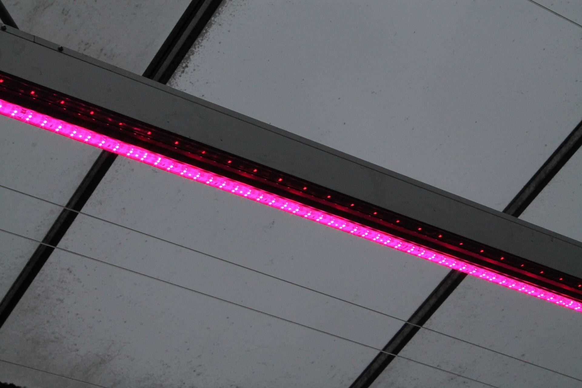 Interpolis: let op bij aanschaf LED-verlichting - Hortipoint