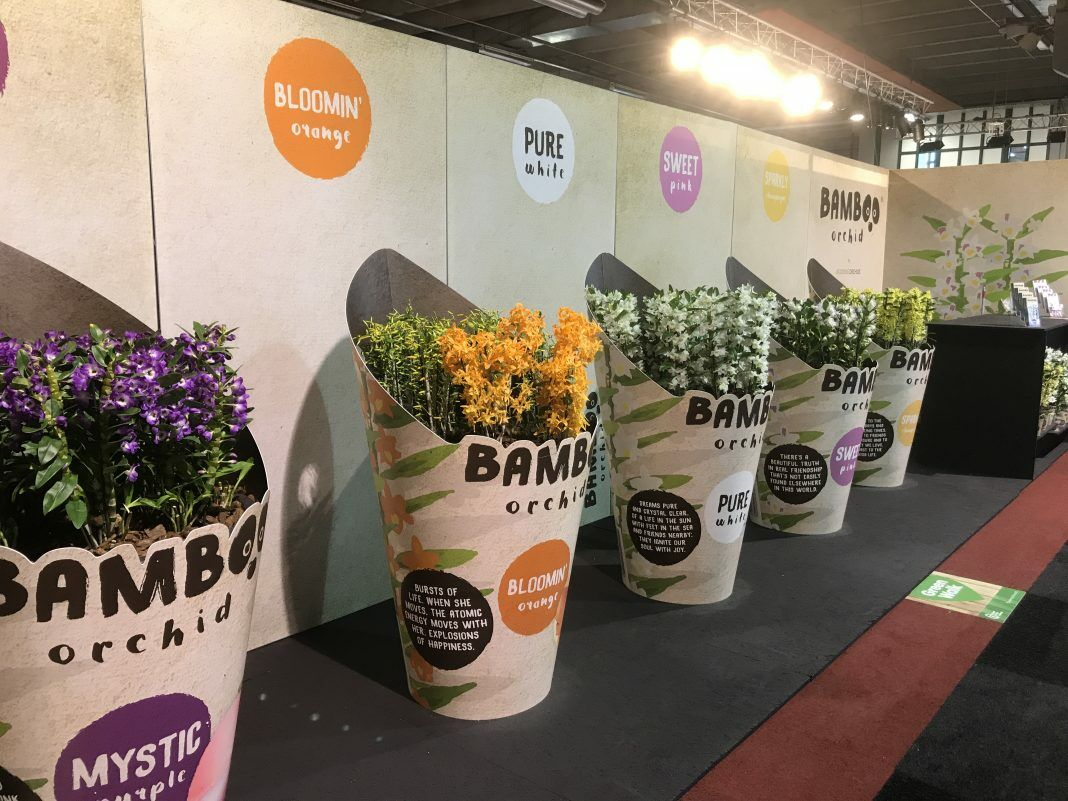 Wooning Orchids Presenteert Nieuwe Bamboo Orchid Hortipoint