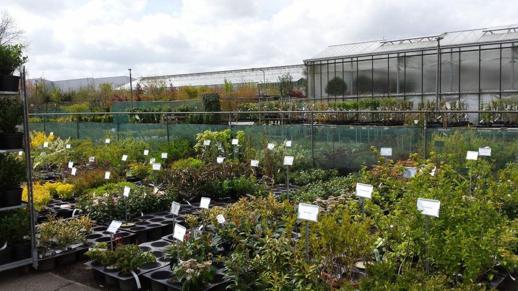Nieuwe cursus Plantenkennis bij OntwerpAcademie Greenlink