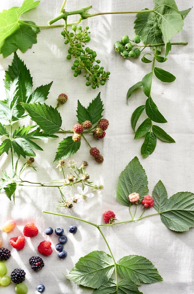 Has hogeschool start in venlo met opleiding healthy living for Opleiding tuin