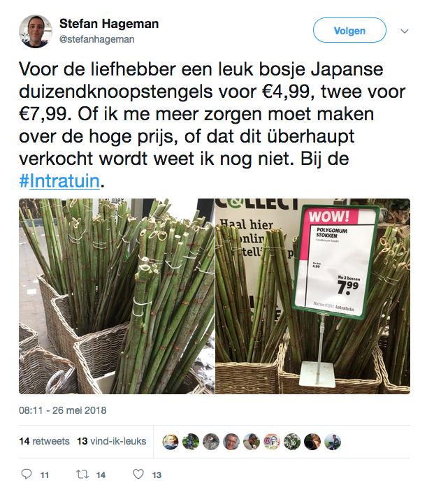 Tweet Stefan Hageman Japanse duizendknoop