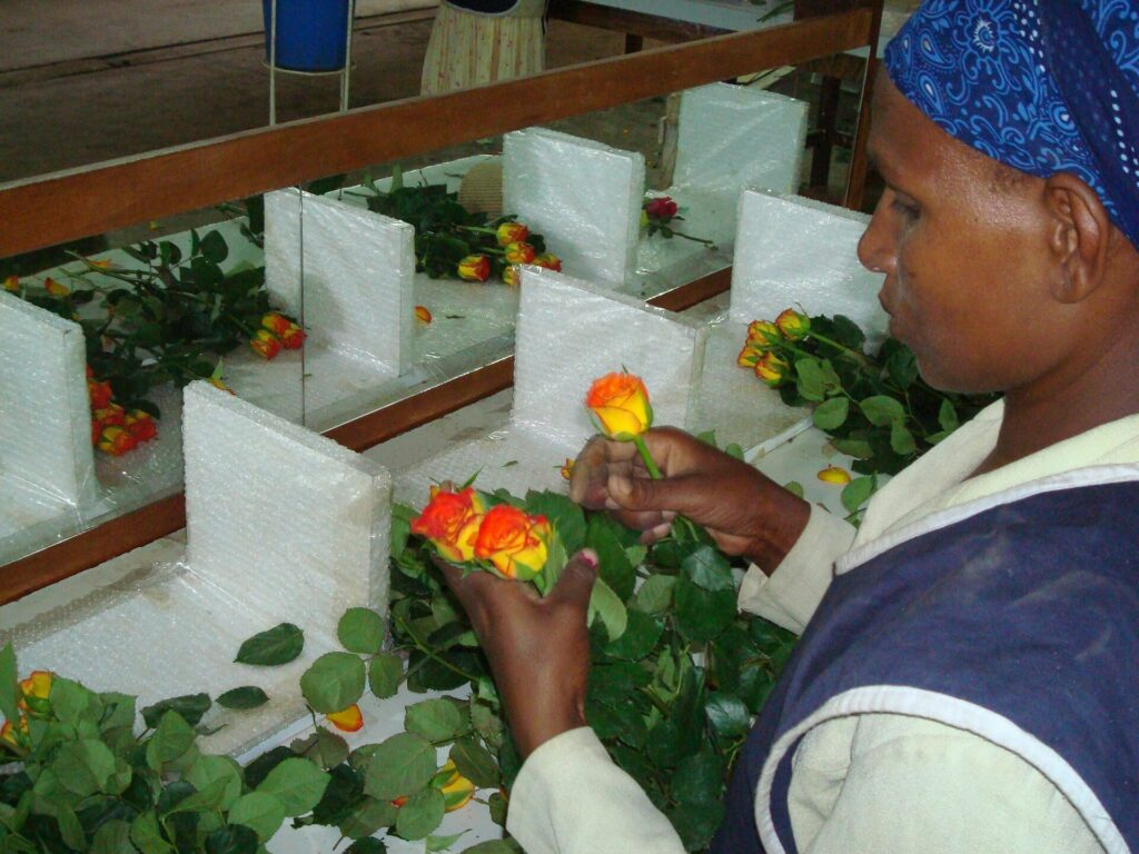 General strike hits flower production in Ziway, Ethiopia