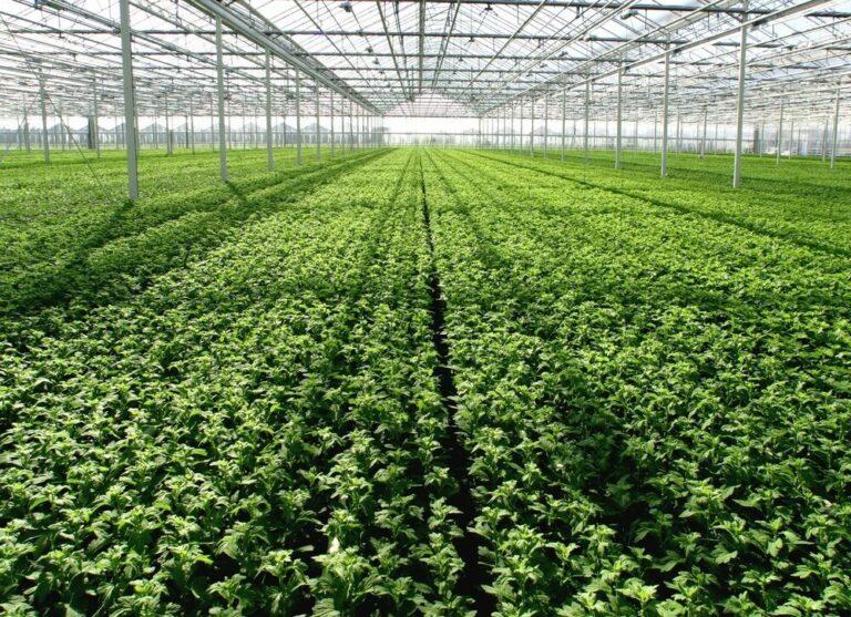 Nederlandse sierteelt: groei in bloemen en planten, bomen onder glas stabiel