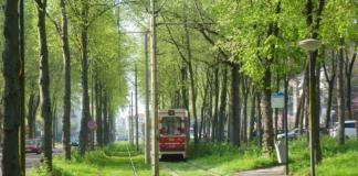 Kap bomen Scheveningseweg gaat door