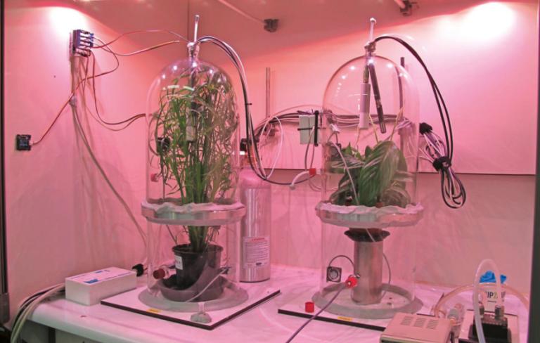 Nieuwe data luchtzuiverende planten meer dan welkom