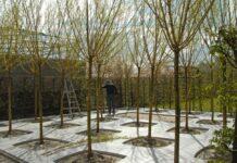 Straatbomenbos Wim van Mello 2012 De Straat als tuin