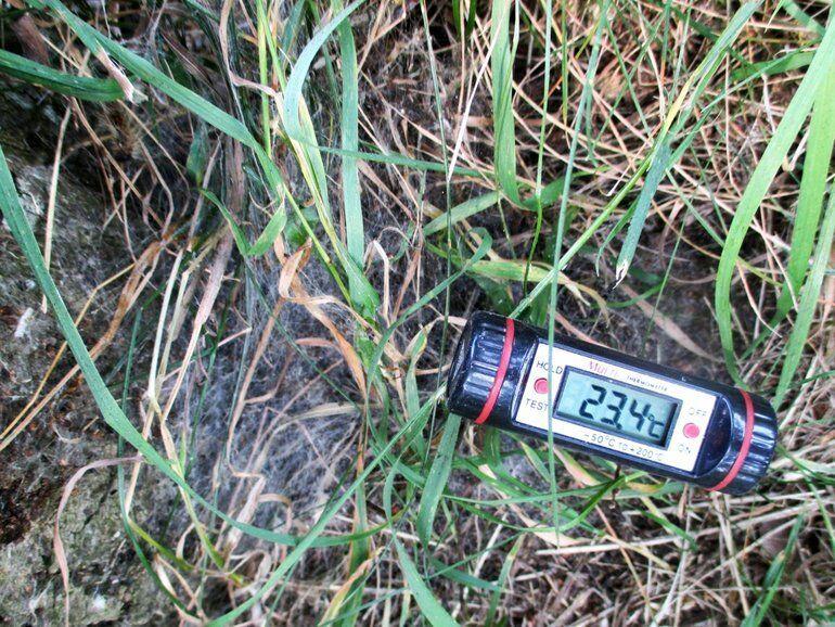 eikenprocessierups, bodemtemperatuur