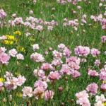 Veldgids plantgemeenschappen