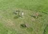 Stuitergras