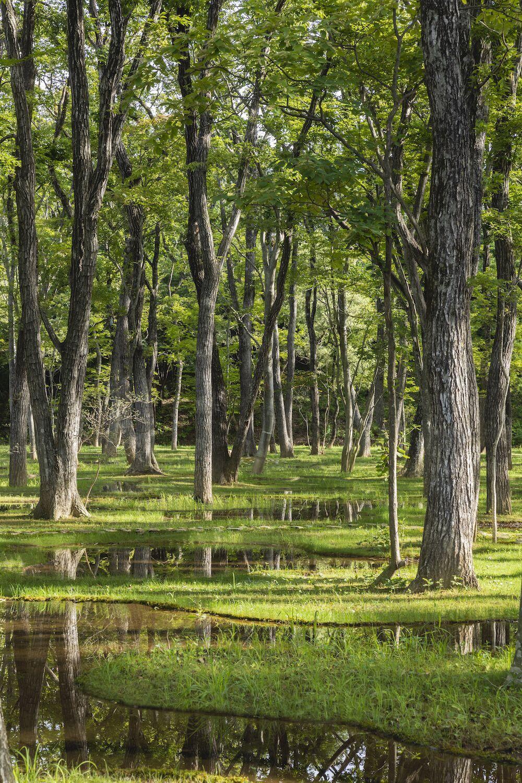 Japanse watertuin wint architectuurprijs