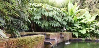 Tuin van Johan van der Perk - bladvormen - zwemvijver