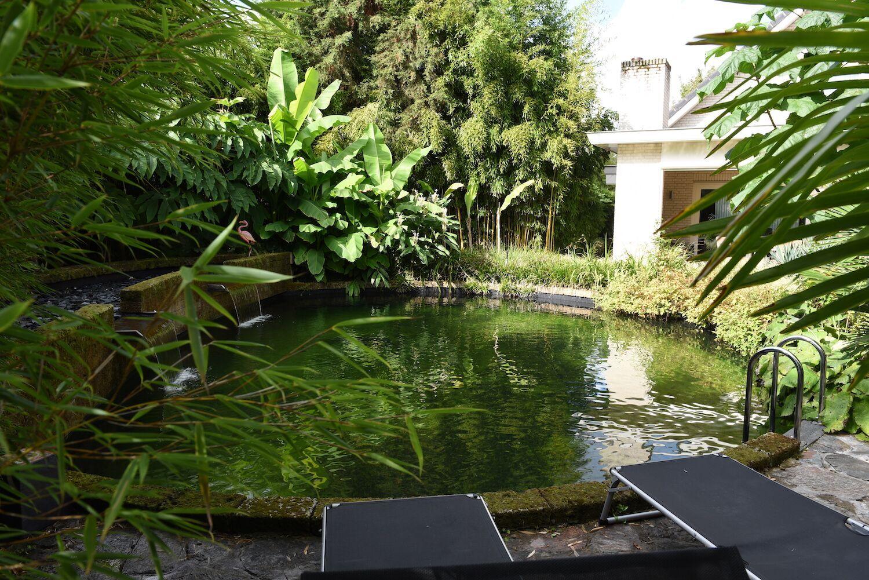 Tuin van Johan van der Perk - Zwemvijver - bladvormen - tropische planten