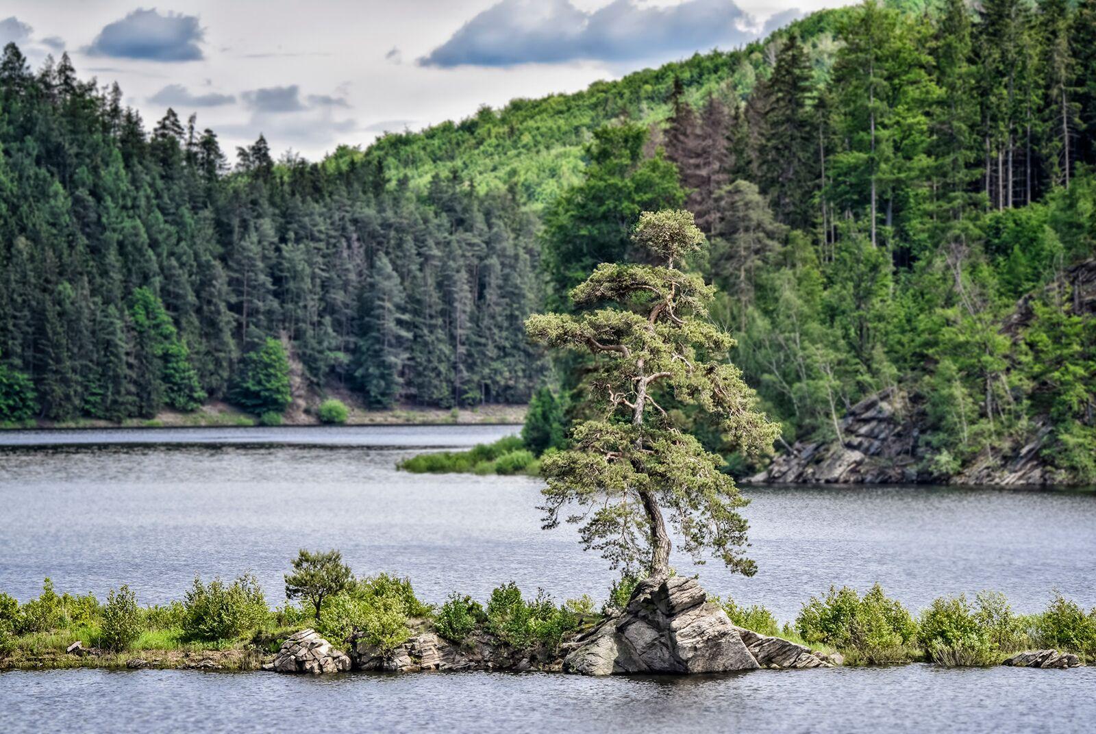 Europese boom van het jaar