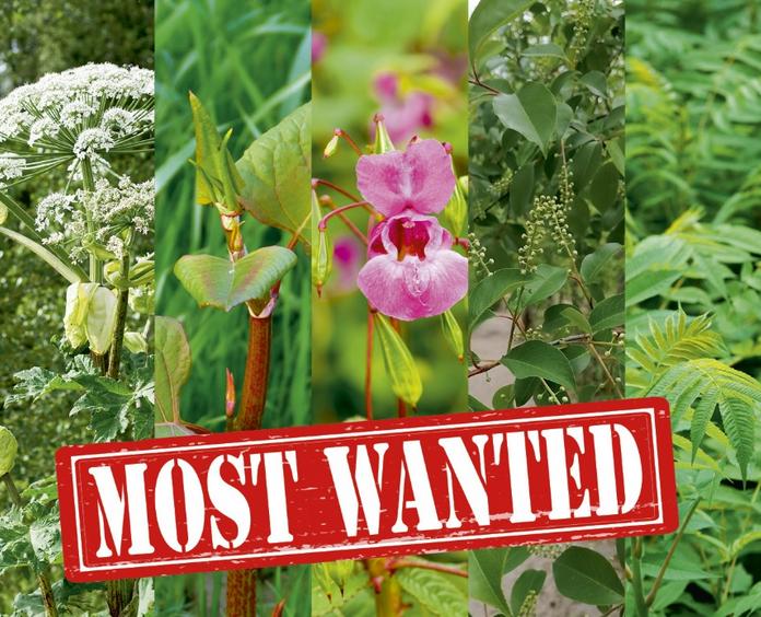 Most wanted invasieve exoten Cover Tuin en Landschap 12