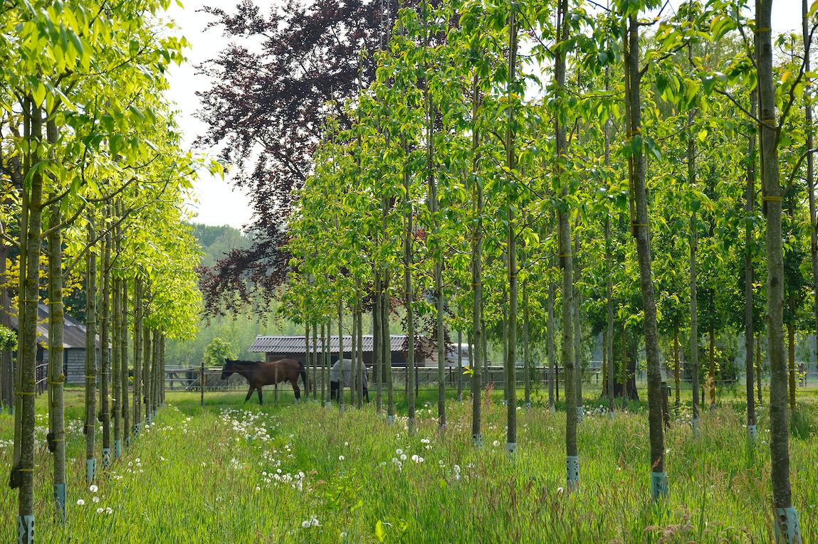 biologische bomen