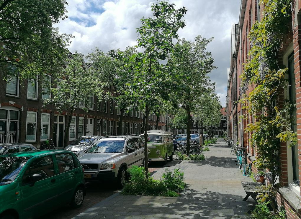 Handreiking Omgevingswet en Bomen